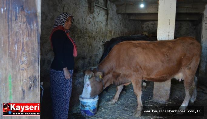 Hayvancılık yapmak için köye taşındı