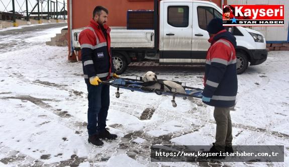 Kocasinan Belediyesi'nden sokak hayvanları için seferberlik