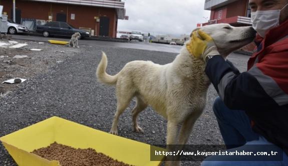 Kocasinan'dan sokak hayvanlarına destek