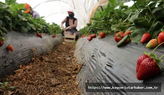 Herkes evde kaldı, çiftçi üretime devam etti