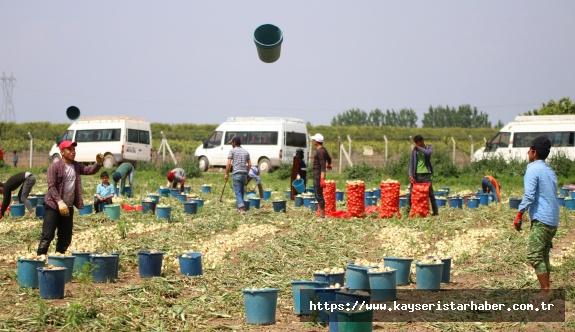 Herkes evinde tarım işçileri soğan tarlasında