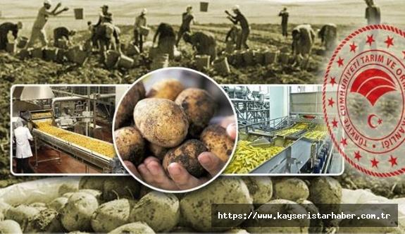 Gıda sanayi için yerli patates çeşidi ve tarım bilim kurulu