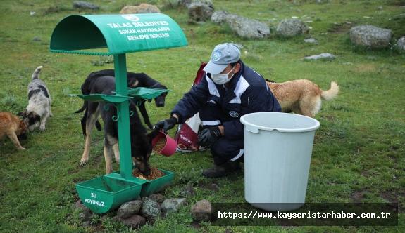 Sokak hayvanlarını özel ekip besliyor
