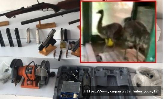 Silah kaçakçılığı baskınında nesli tükenmekte olan hayvanlar ele geçirildi