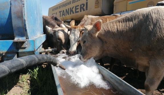 Başkan Büyükkılıç Karantinadaki Çiftçinin Yüreğine Su Serpti