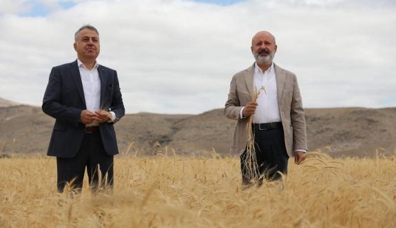 Kocasinan'da Ata Yadigarı Ve 28 Kromozomlu Gacer Buğdayının Hasatı Yapıldı