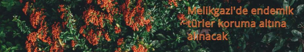 Melikgazi'de endemik türler koruma altına alınacak