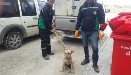 Yaralı köpeğe vatandaş sahip çıktı