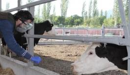 Korona virüse yakalanan çiftçinin hayvanlarına Tarım ve Orman Müdürlüğü ekipleri sahip çıktı .