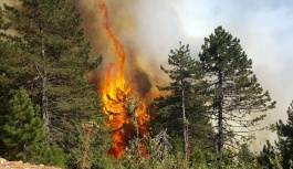 Orman Yangınları Genelgesi