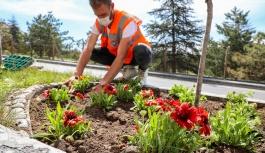 Dört Bin Yana 100 Bin Çiçek; Talas Çiçek Açıyor